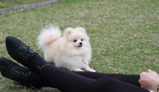 ペットシッターに聞く板橋区犬の散歩代行コース 名物商店街を愛犬と歩く
