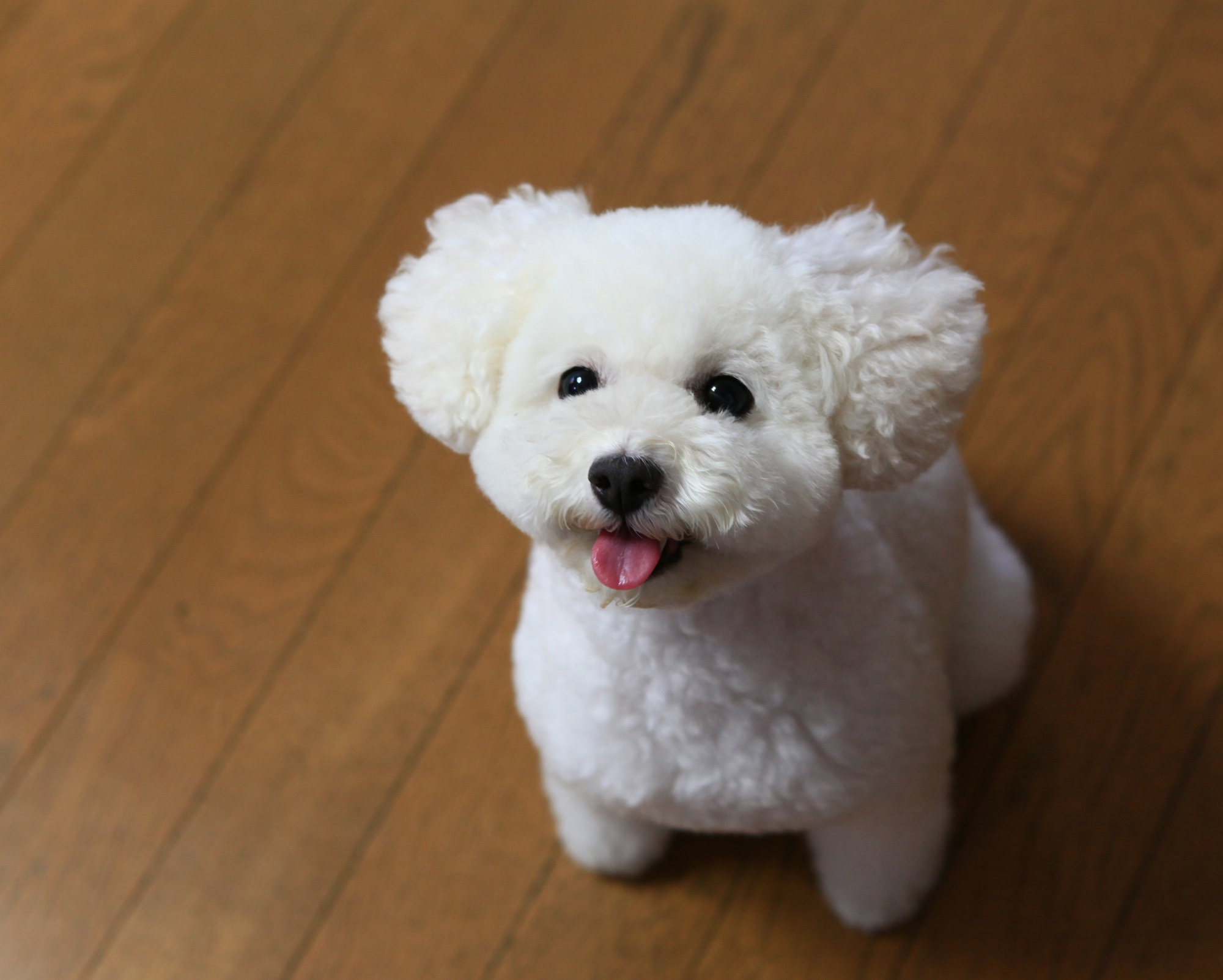 楽し気な犬