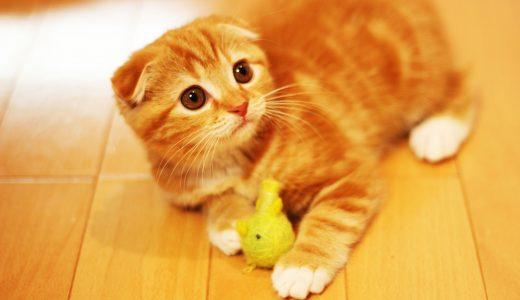 愛猫が旅行中快適に留守番できる8つの心得|猫の性質に合う預け先とは?