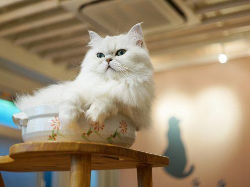 人々に見られる猫