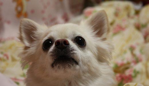 愛犬を旅行中快適に留守番させるなら|シッターが教える対策2017年版