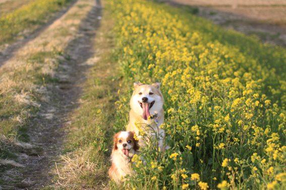 カメラ目線の犬達