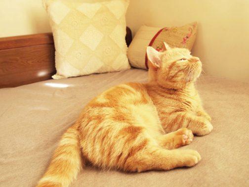 家でゆっくり過ごす猫