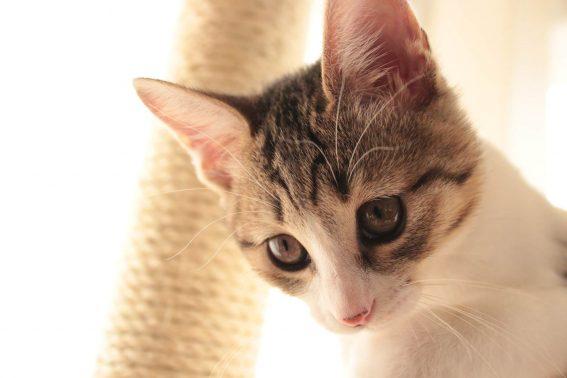 自宅にいる猫