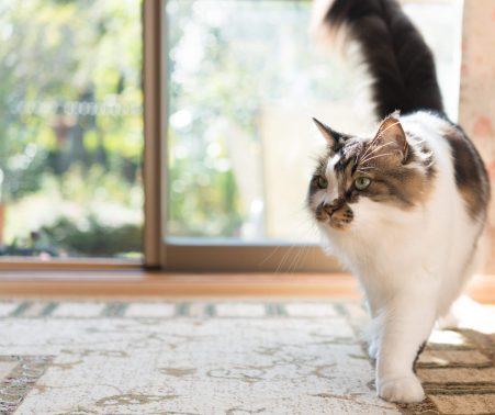 自宅でのびのび過ごす猫