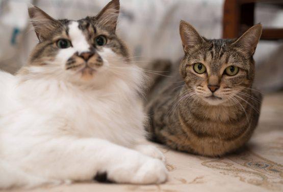 見つめる猫たち