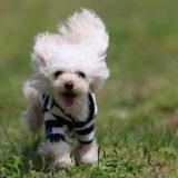 公園ではしゃぐ犬