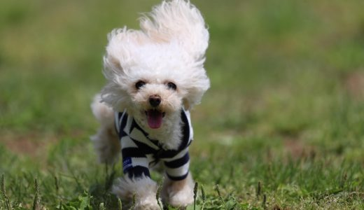 杉並区のおすすめペットシッター情報|愛犬の散歩代行ならココ!