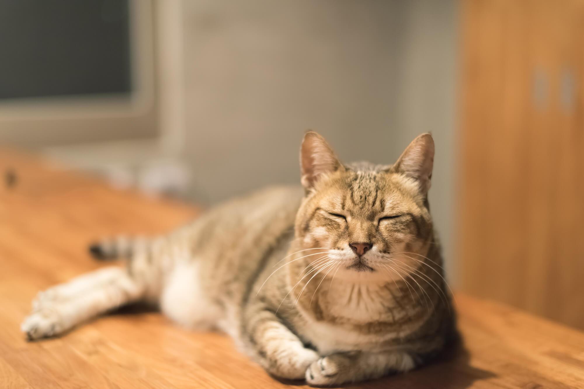 猫のペットシッター事情
