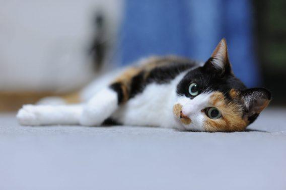 リラックスした愛猫