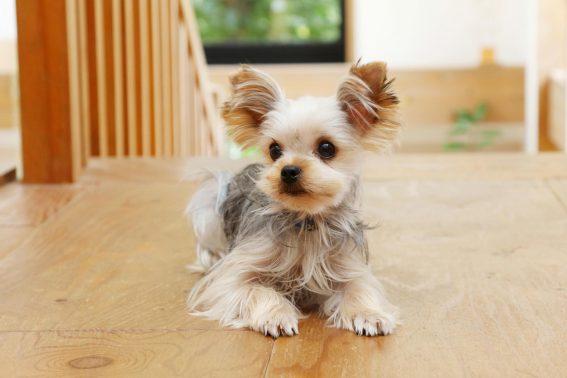 自宅で待つ愛犬