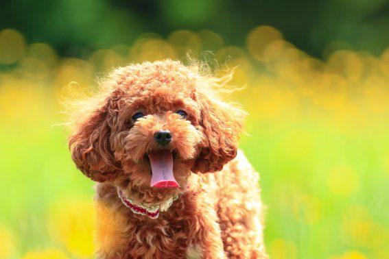 花畑に囲まれた犬