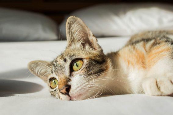 日の光を浴びる猫
