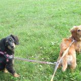 楽しく散歩する多頭の犬