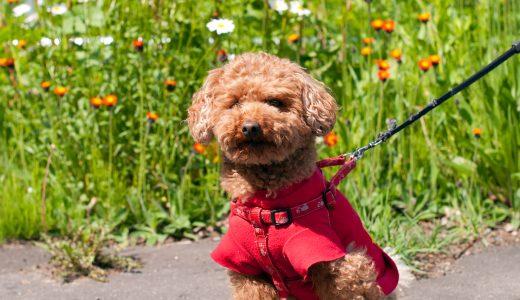 千代田区犬のペットシッター事情|皇居の周りを犬の散歩代行!