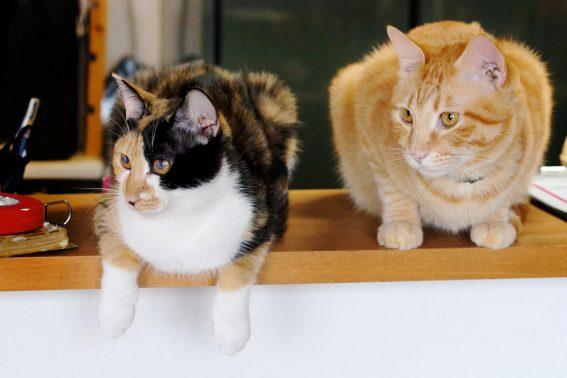 仲が良い猫2頭