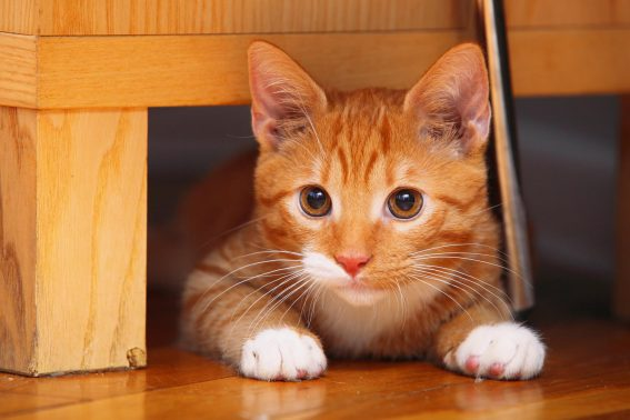 狭い場所が好きな猫