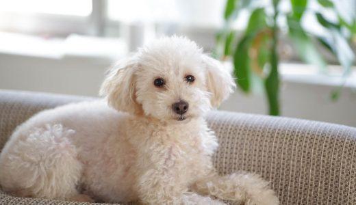 犬のホテルを東京で利用する際お断りされてしまった【7つの事例】とは