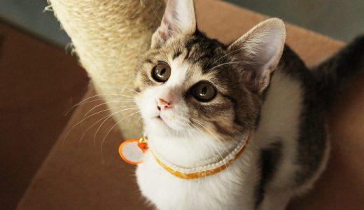 荒川区ペットシッター事情|動物に優しい環境で愛犬・愛猫のお世話を代行