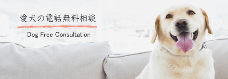 プロのペットシッターによる愛犬の無料電話相談