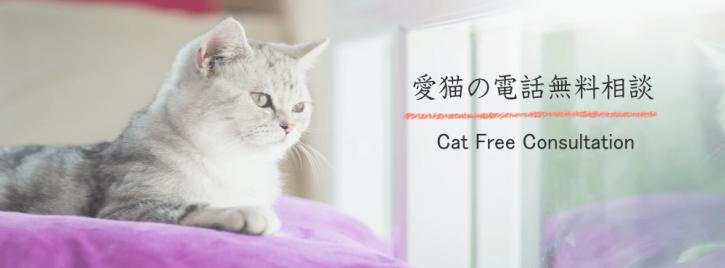 プロのペットシッターによる愛猫の無料電話相談