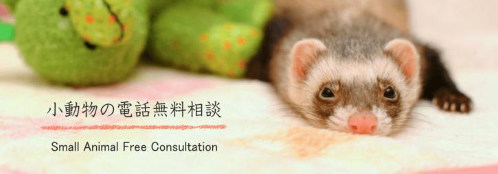 プロのペットシッターによる小動物の無料電話相談