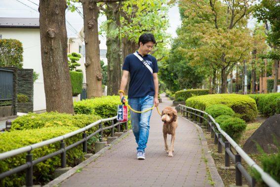 お散歩訓練