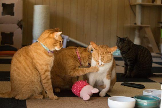 自宅でのんびりな猫達
