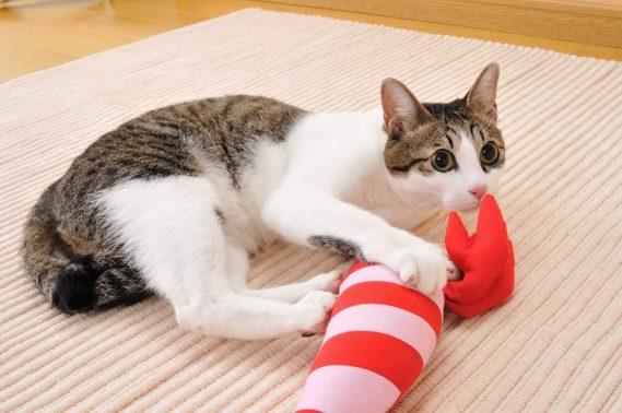 快適な部屋でおもちゃで遊ぶ猫