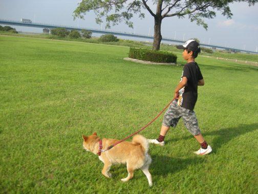 散歩する子供と犬