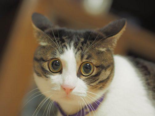 自宅で飼い主を待つ猫