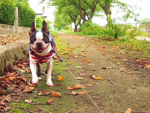 愛犬のお散歩コースを増やし、より快適なペットライフを!