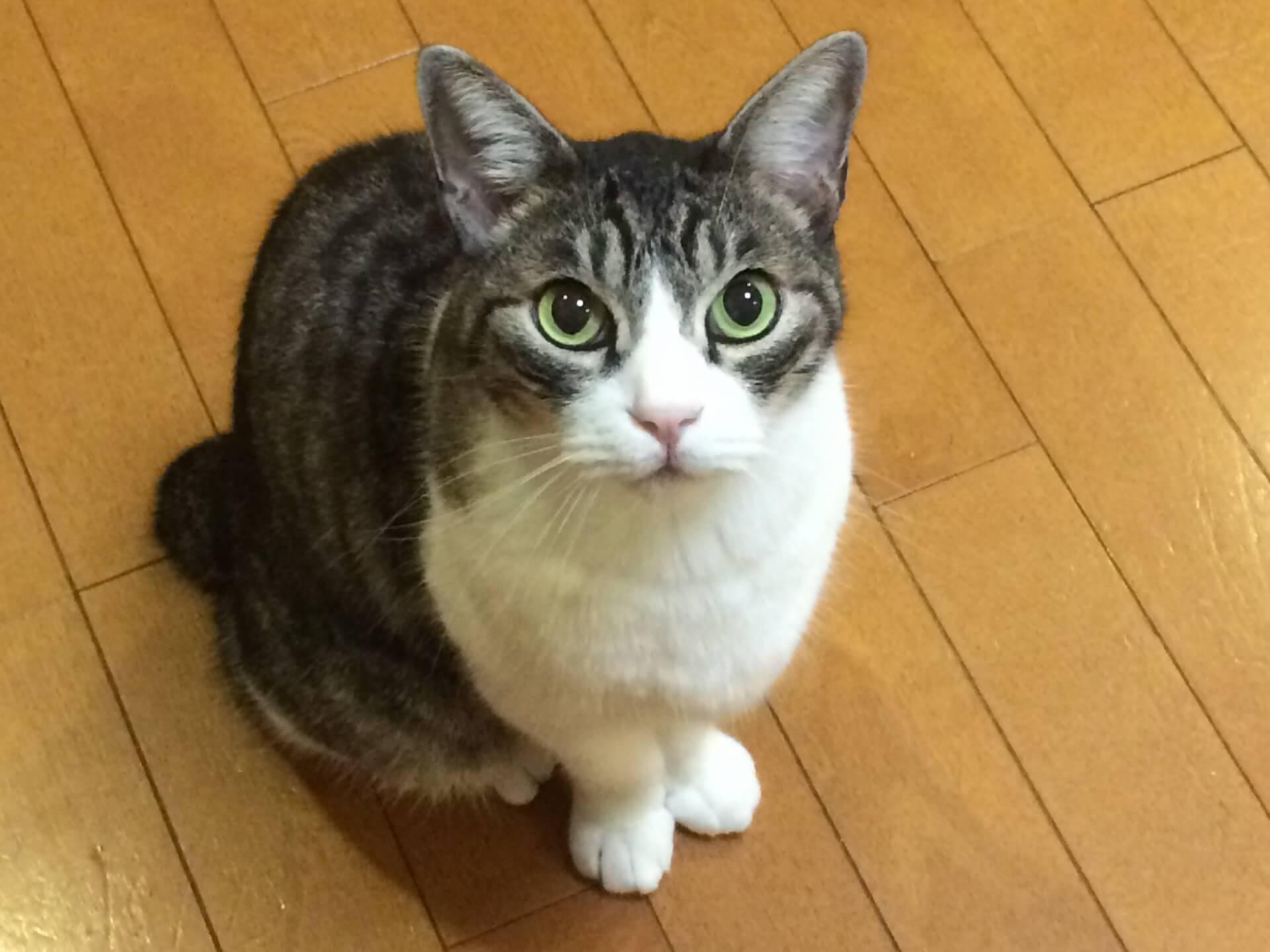 こちらを観察する猫