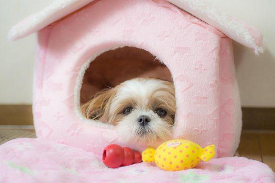 暖かいベッドで寝る犬