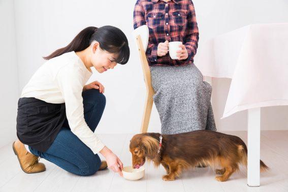 スタッフと飼い主の話し合い
