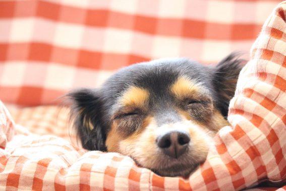 ゆっくり休む犬