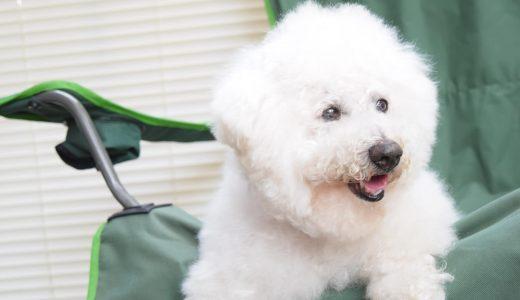 高齢犬の介護・日常のお世話のために【ペットシッターができること】