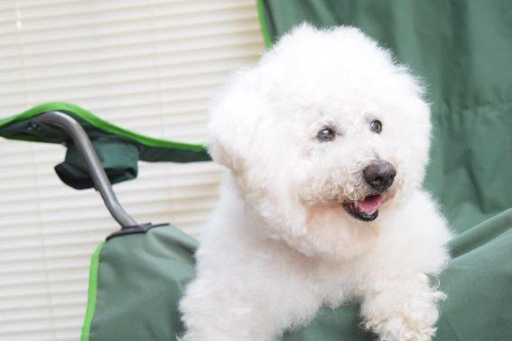 椅子の上にいる老犬