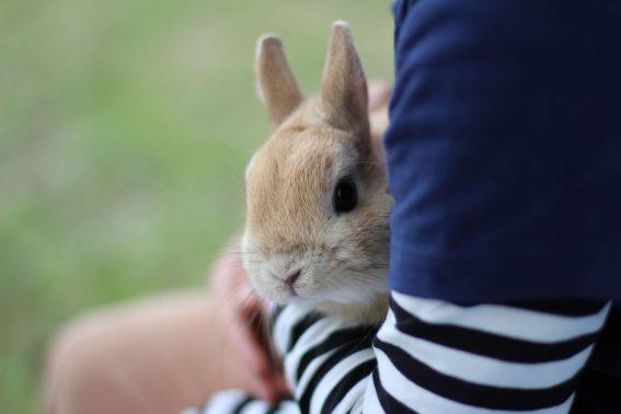 抱っこされる小動物