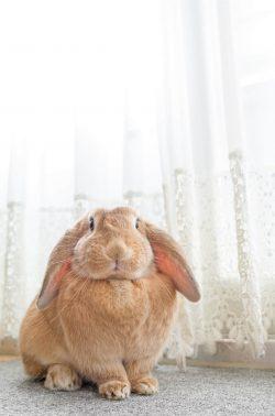 自宅で安心のウサギ