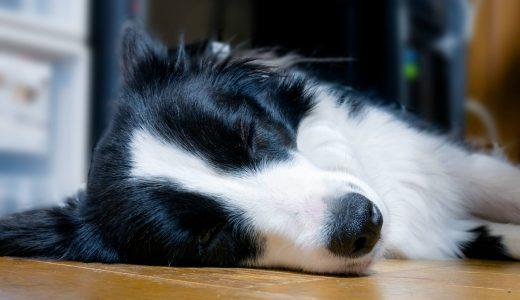 夏休みもこれで安心|ペットを旅行中留守番させる最適な方法とは?