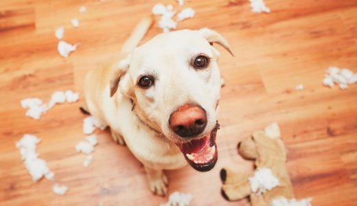 大型犬の留守番が心配な方へ|おすすめのドッグシッターサービスとは?