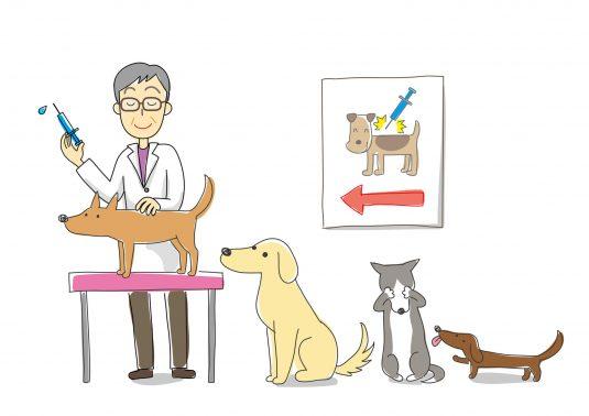 予防接種する犬