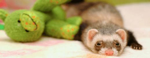 小動物・各種出張サービス
