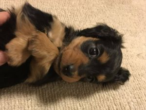 可愛い愛犬のために