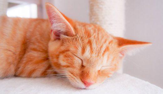 触って快適に♪猫の日々の健康維持に役立つマッサージ方法5つ
