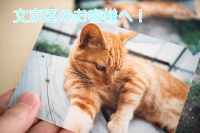 締切前の急用にも!東京都文京区で安全にペットをお預けする方法。