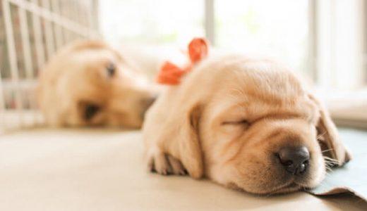 【子犬が家に来たら】迎えるときに必ず守ってほしいお世話の注意点