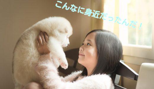 愛犬を海外旅行、それ以外の時でも預ける事ができるシッター活用事例5つ