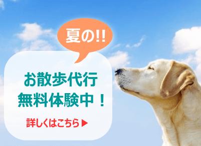 夏のお散歩代行無料体験中!